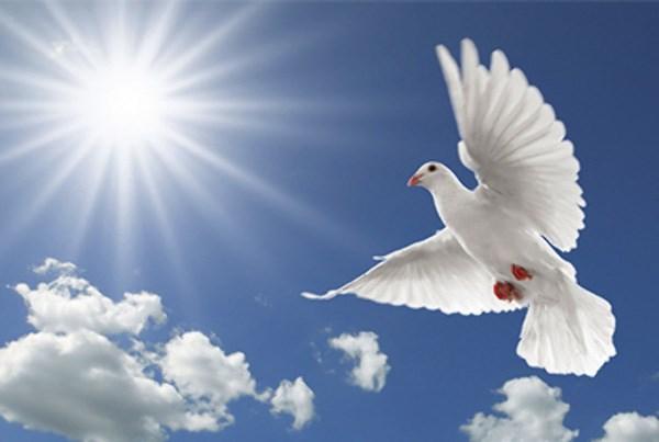 suy nghi ve gia tri cua hoa binh - Suy nghĩ về giá trị của hoà bình