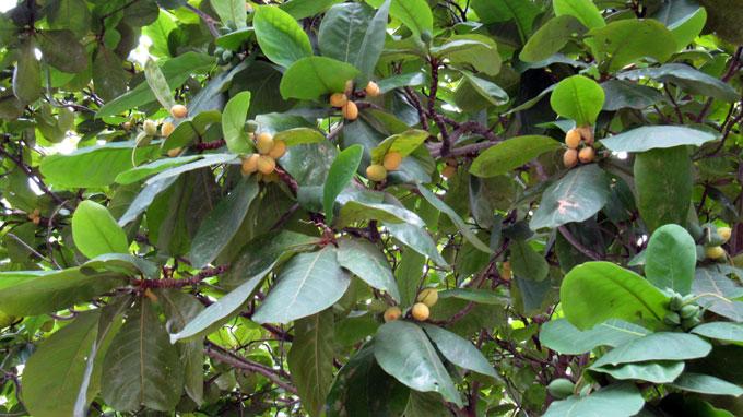 bieu cam ve cay bang - Biểu cảm về cây bàng