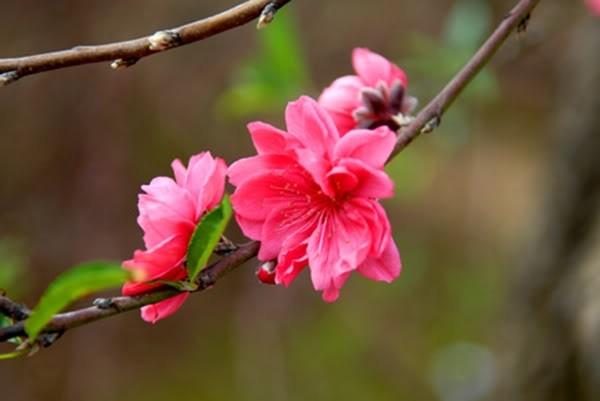 cam nghi ve mua xuan - Cảm nghĩ về mùa xuân