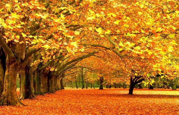 143 - Biểu cảm về mùa thu