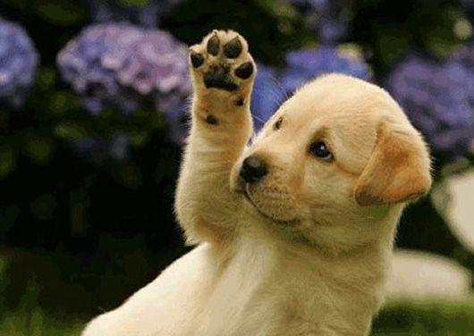 146 - Biểu cảm về con chó mà em yêu thích