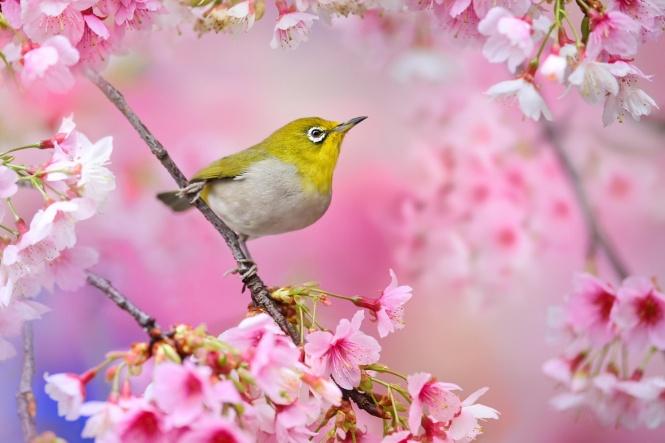 55 - Cảm nhận về bài thơ Vội Vàng của Xuân Diệu